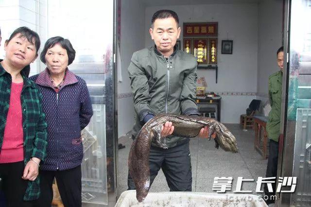 联花村村民程国命展示娃娃鱼长沙晚报全媒体记者张禹通讯员喻恩来摄影报道