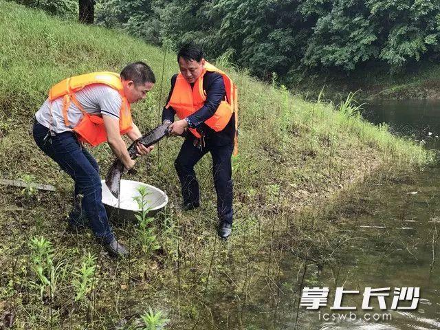 工作人员将娃娃鱼放归环境优美的青羊湖